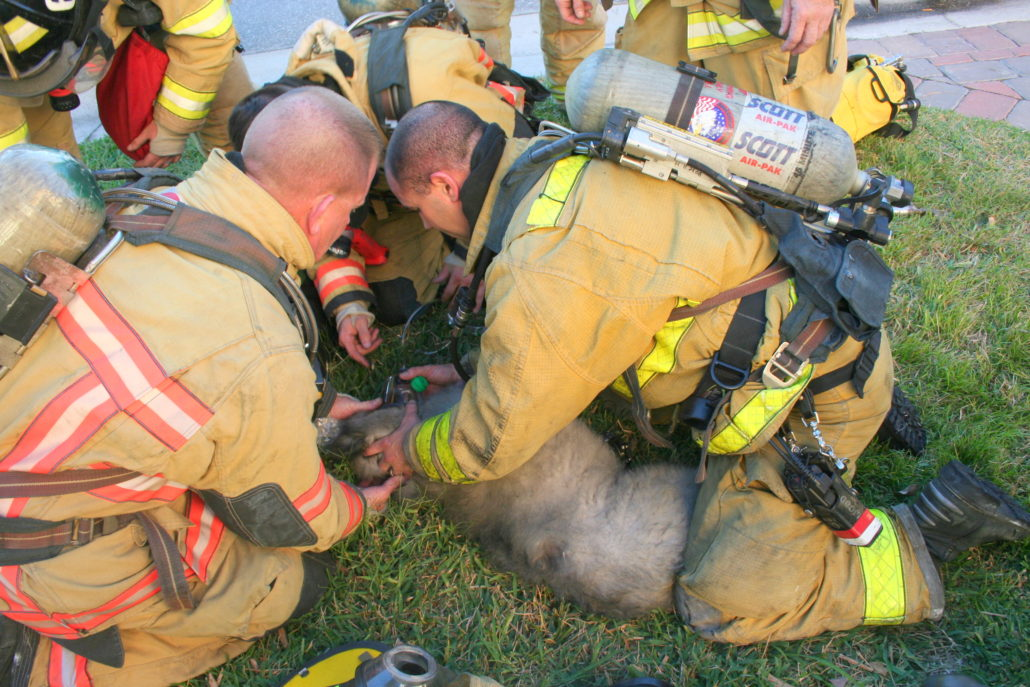 Iona McGregor Firefighters Fighting assisting an injured dog